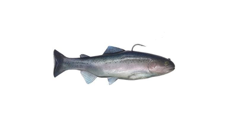 Huddleston Deluxe 10 Inch Trout - HO